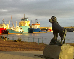 Sea Dog Bamse (Montrose)